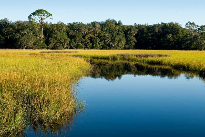Coastal wetlands play key role in reducing flood damages from storm surge, study finds