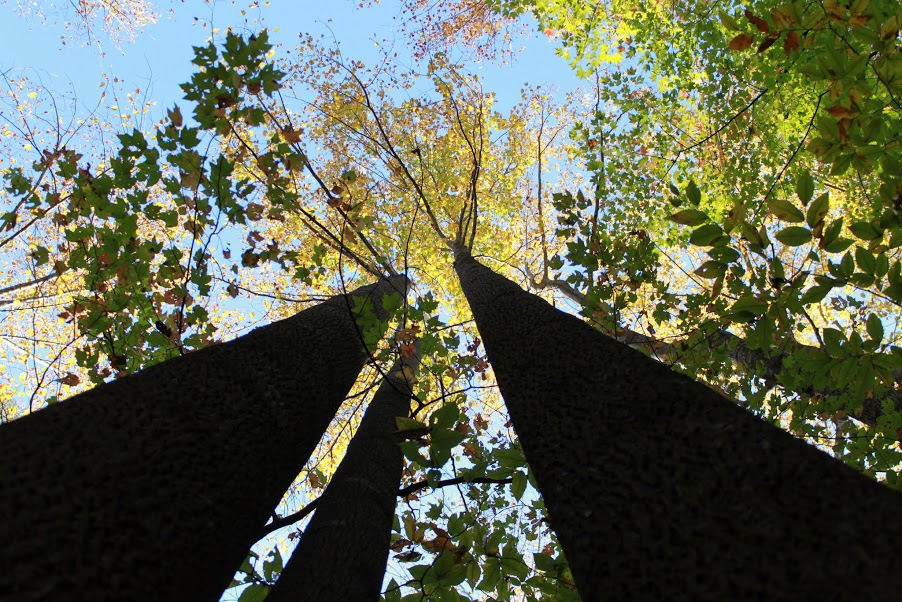 Maryland's Forest Preservation Act of 2013 requires a no net loss of the state's current 40% tree canopy.
