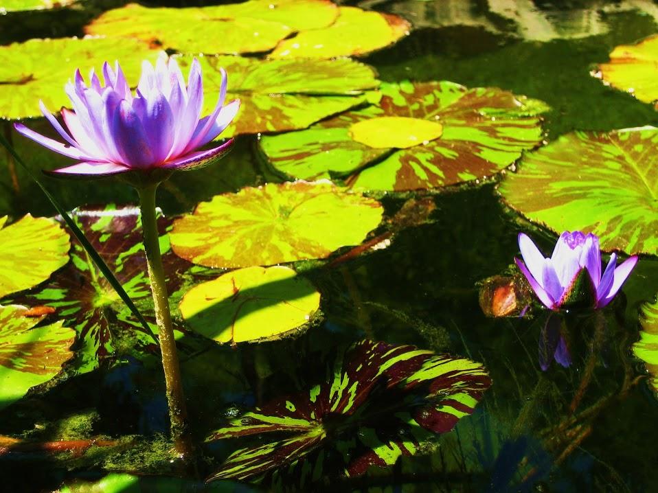 wetland image