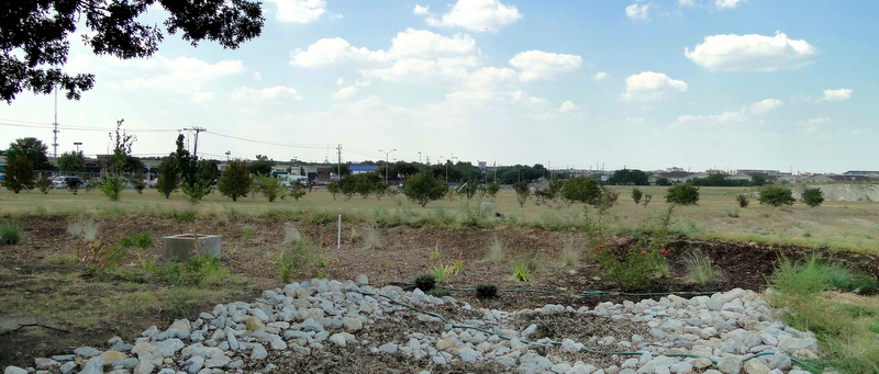 A rain garden onsite captures water from the center's parking lot and other parts of the property.