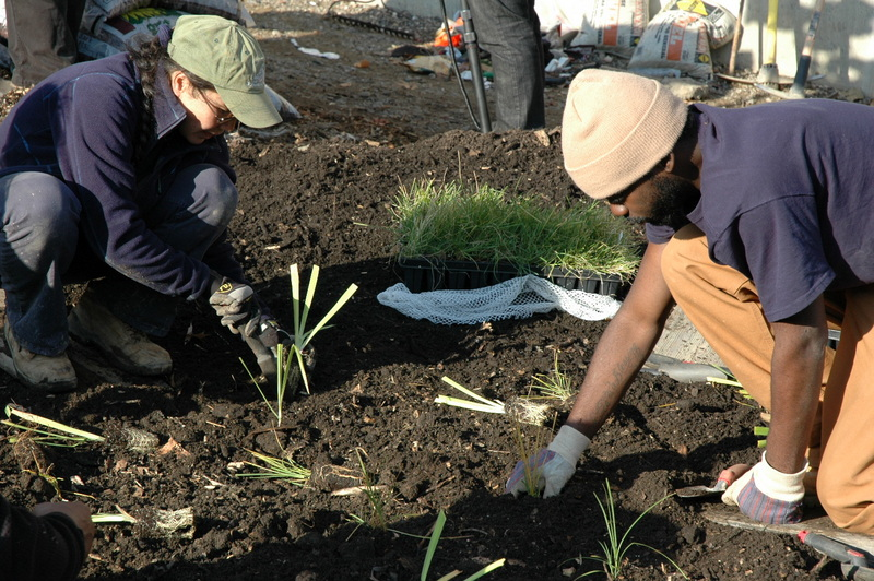 Since the construction of Hunts Point Riverside Park along the Bronx River in 1998, there has been a community-wide movement to not only restore the river and riverfront areas, but to also increase the awareness and use of green infrastructure throughout the city. Pictured are two volunteers planting a garden in the Bronx.