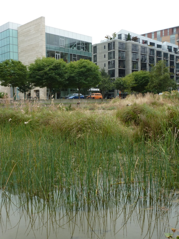 Green infrastructure augments or supplements gray infrastructure, reducing stormwater management costs and providing parks and green space in cities. Image credit: Kathleen Wolf