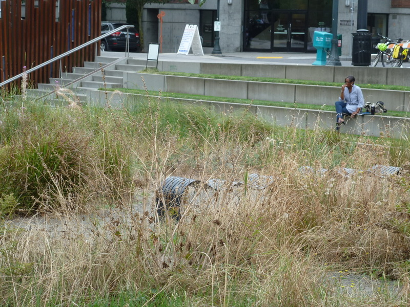 Large green infrastructure spaces may be naturalistic and look unkempt. More formal edges provide the 'cues to care,' as described by Joan Nassauer in a Landscape Journal article, that improve social acceptability of naturalistic landscapes.