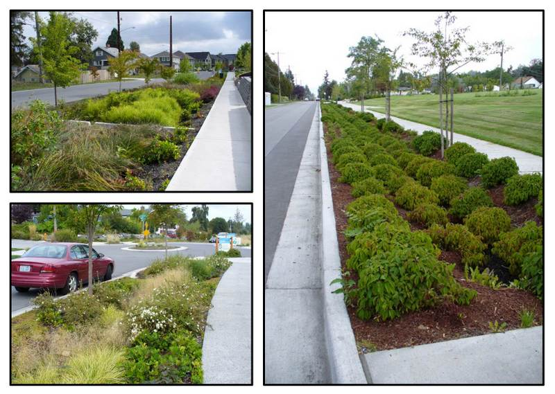 There are many design choices for green infrastructure installations. More variety in the plant palette can increase bioswale function, enhance biodiversity (for instance, creating pollinator pathways), and create more vibrant urban places. Image credit: Kathleen Wolf