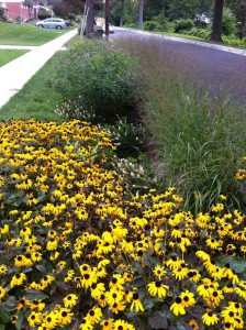 Dense plant cover stabilizes this retrofit and adds other environmental benefits to the streetscape. Image credit: Montgomery County, Md., Department of Environmental Protection