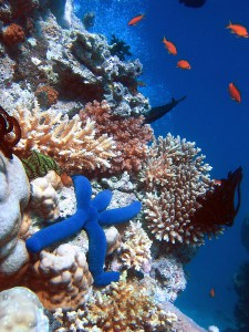 Coral reefs could help some coastal communities reduce the effects of climate change. Image Credit: Richard Ling via Wikimedia Commons