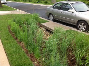 Switch grass is planted around the inlet to act as a strainer for entering silt and trash, enabling easier maintenance of the inlet. Image credit: Montgomery County, Md., Department of Environmental Protection