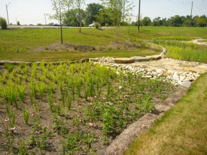 Establishment of vegetation around and within bioretention basins at the University of Cincinnati's Clermont College campus. Image credit: Chris Rust, Strand Associates, Inc.