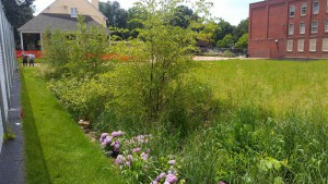 The Greene Street Friends School is an example of a Stormwater Management Incentives Program retrofit. Half of the school parking lot was turned into a rain garden, managing stormwater and making the property more attractive. Image by PWD.
