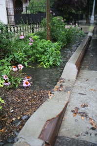 Bioswales, Dean St and 4th Ave, Brooklyn