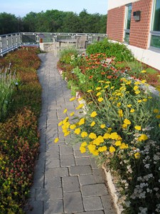 WSSI's extensive green roof with intensive planting areas. The intensive soil depth is 10 to 23 cm (4-9 in), which helps the plants survive in the harsh roof environment. The green roof was the most expensive LID practice installed at WSSI at $342/sq m ($31.80/sf). Image credit: WSSI