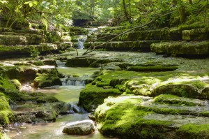 Livestream will allow people to listen and interact with groundwater data from four springs across Kentucky, each in unique geologic settings.