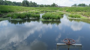 Floating treatment wetlands on a stormwater pond in Durham, N.C. Image by Ryan Winston, NCSU
