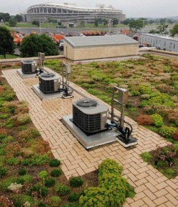 A green roof after maintenance. Image by DC Water