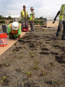 Maintenance performed on a DC Water green roof. Image by DC Water
