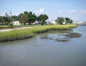 A living shoreline in Beaufort, North Carolina. Image by Carolyn Currin
