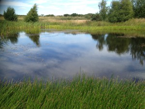 A stormwater pond. Image from The Highland Council