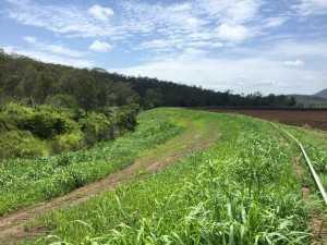 oThe restored catchment site at Laidley Creek, after workers replanted more than 4,000 native plants and grasses. (Photo courtesy of Port of Brisbane Pty Ltd.)