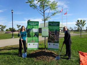 In addition to the City of Hamilton's tree-pricing campaign, Gage Park administrators also held a tree planting ceremony on Sept. 21. The city also sponsors a Street Tree Planting Program, which offers free trees to Hamilton homeowners on adjacent city-owned roads. Photo credit: Alex Moroz/City of Hamilton.