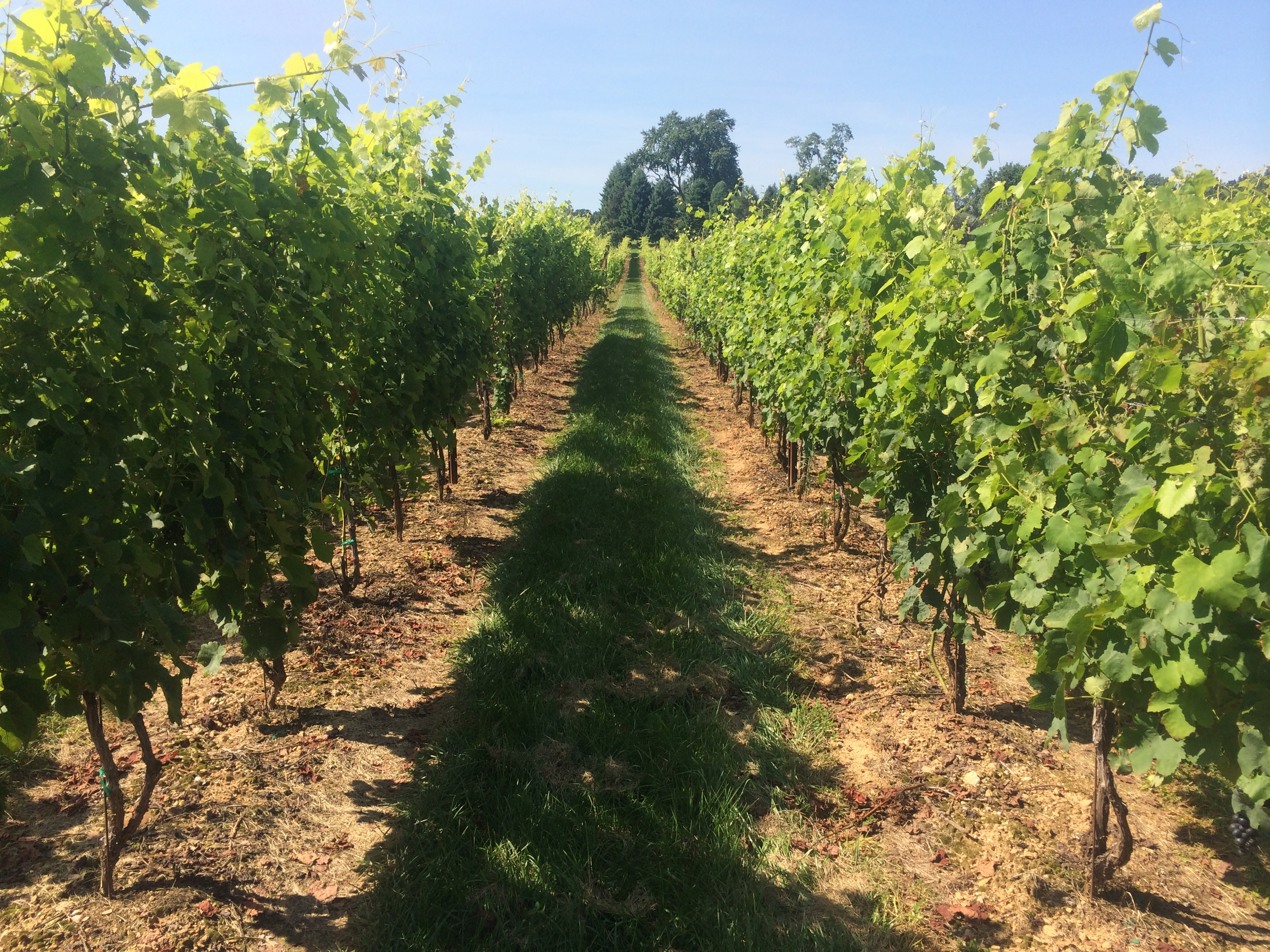UC Davis, GE, and Winesecrets turn stormwater into wine