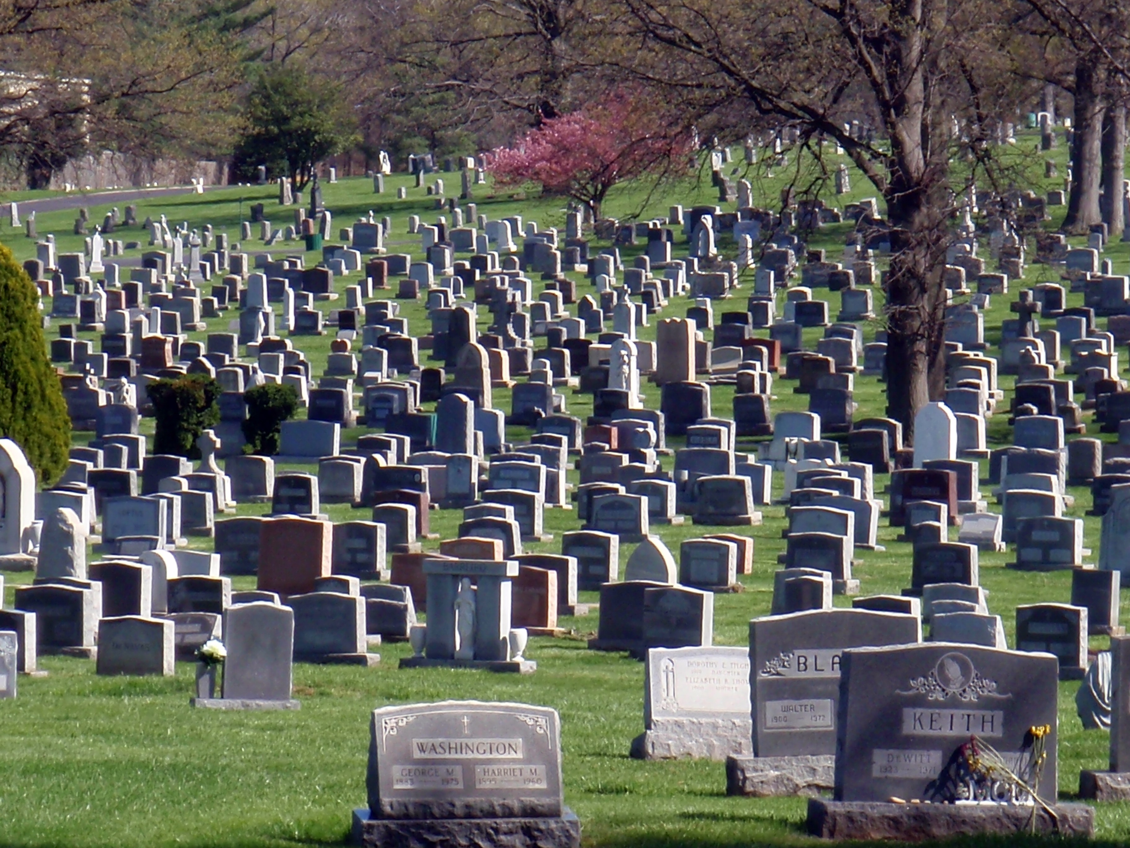 Historic D.C. cemetery partners with environmentalists to reduce impervious space
