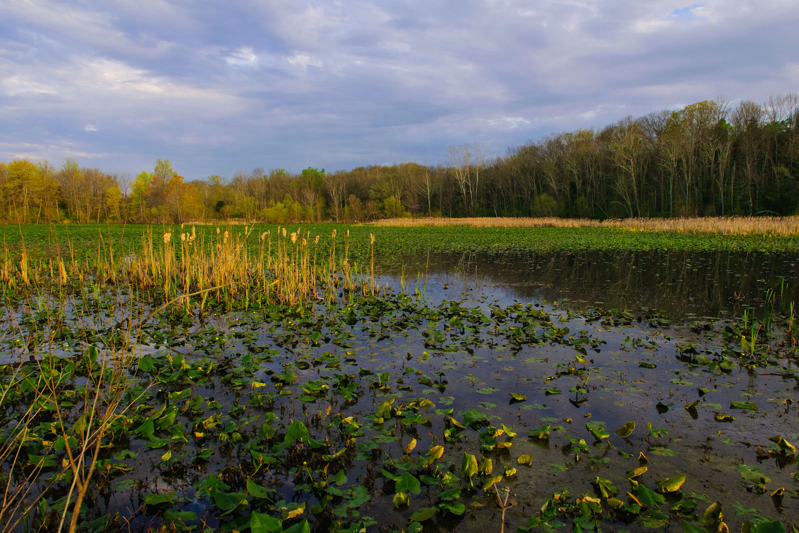 Record-breaking summer rainfall undermines Chesapeake Bay recovery efforts