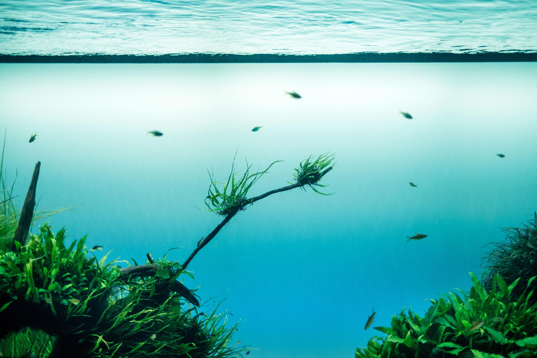 Chesapeake Bay Grasses Unfazed After Record-Breaking Precipitation