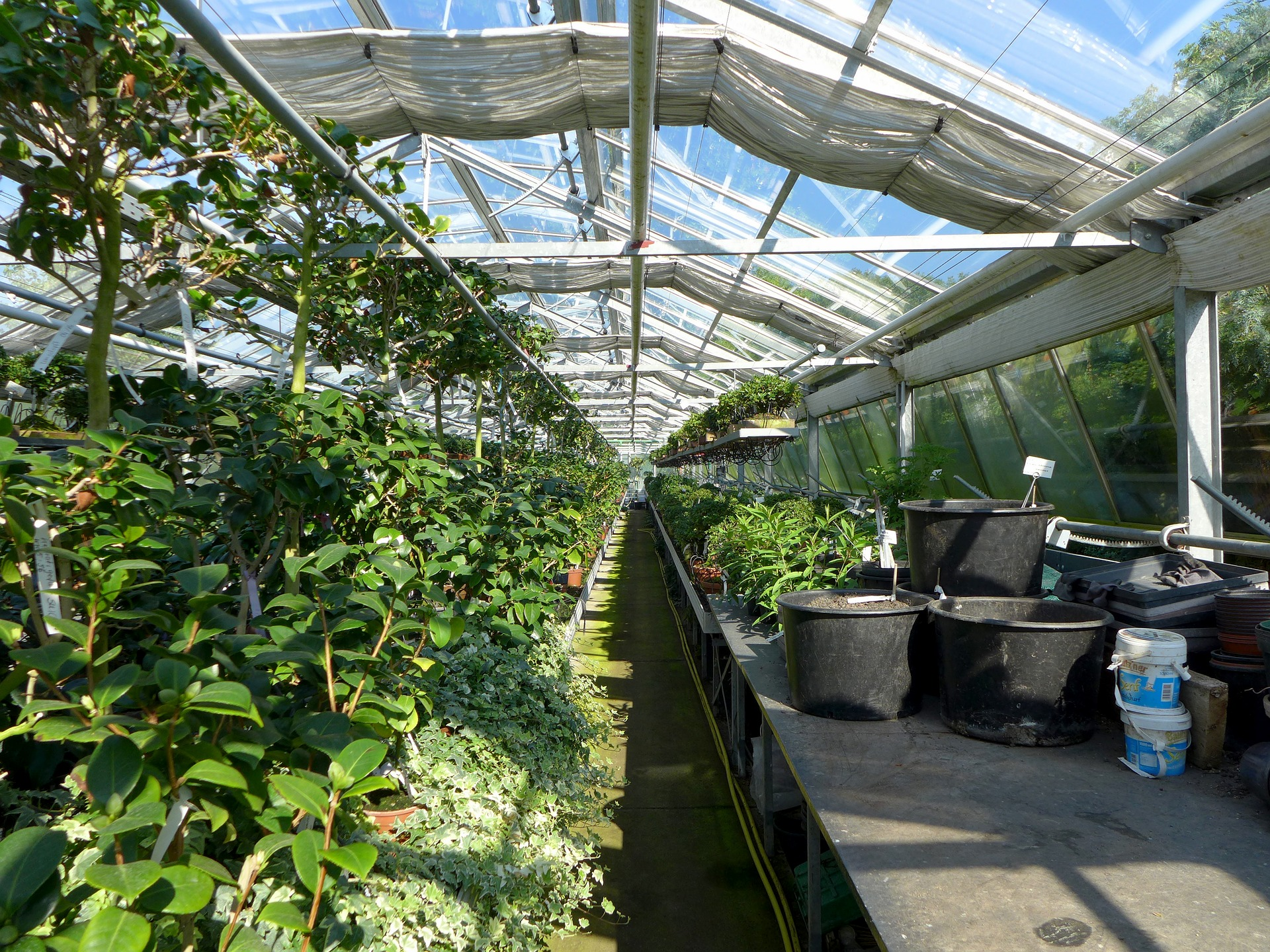 USDA Studies Plant Nursery Runoff Remediation