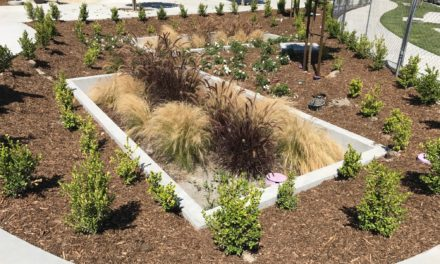 Filterra® Bioretention System – Contech Engineered Solutions