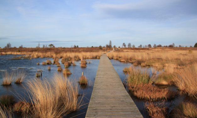 Targeted Wetland Restoration Maximizes Nutrient Removal